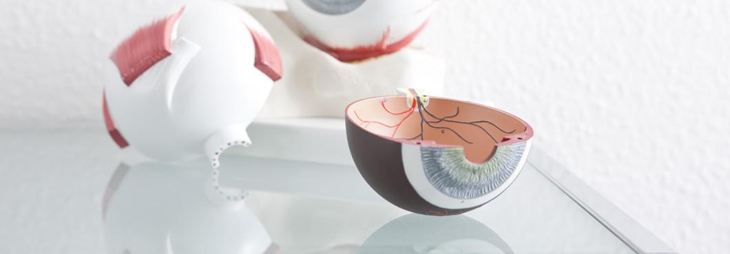 Mitglieder - Augenärzte und Augenzentren in Dresden